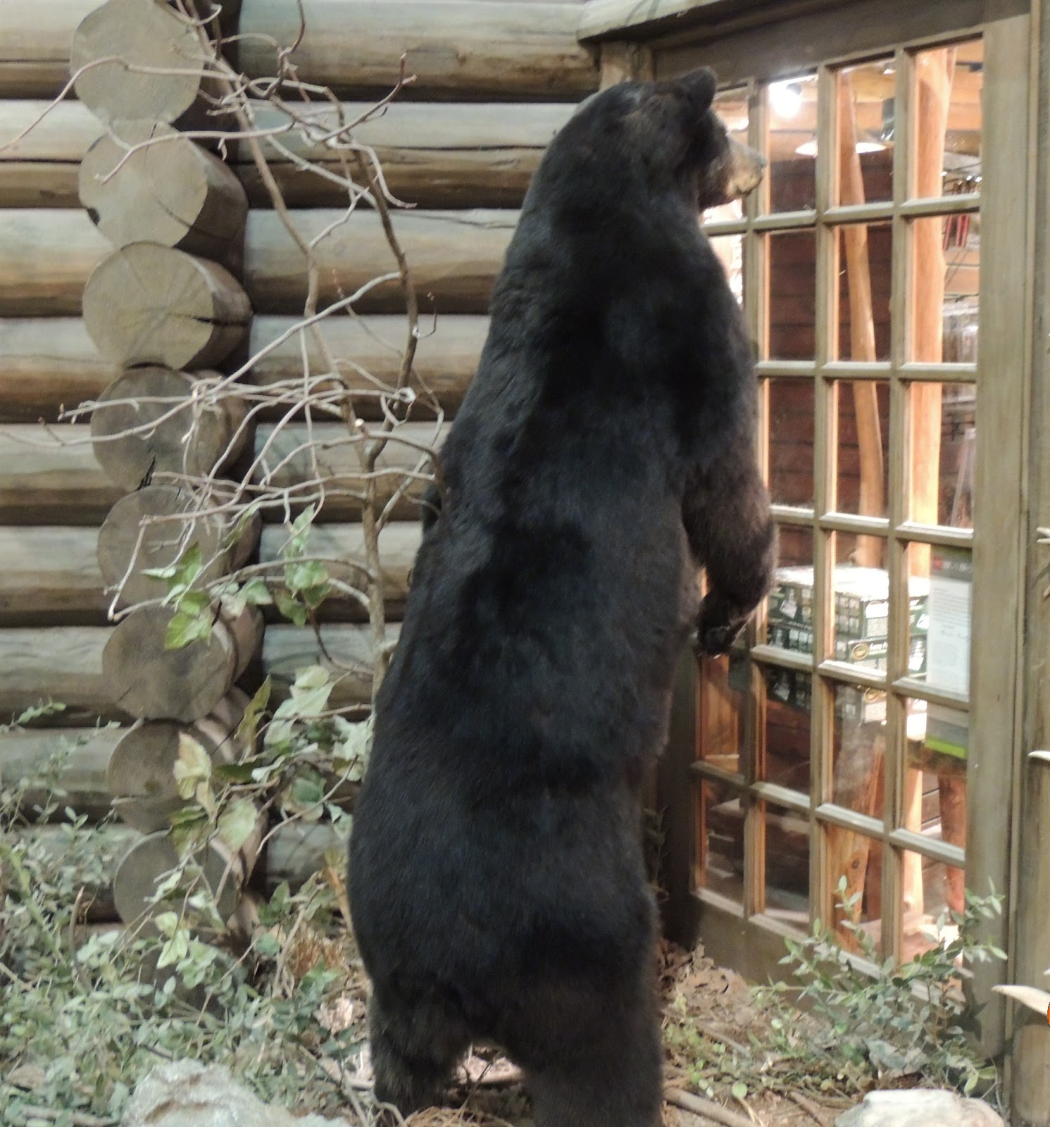 peeking+bear+bp.JPG