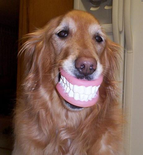 funny-dog-teeth.jpg