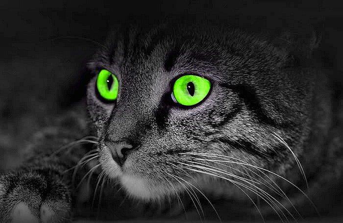 catghosts.jpg