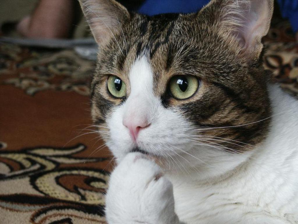 thinking-cat-wallpaper-1.jpg