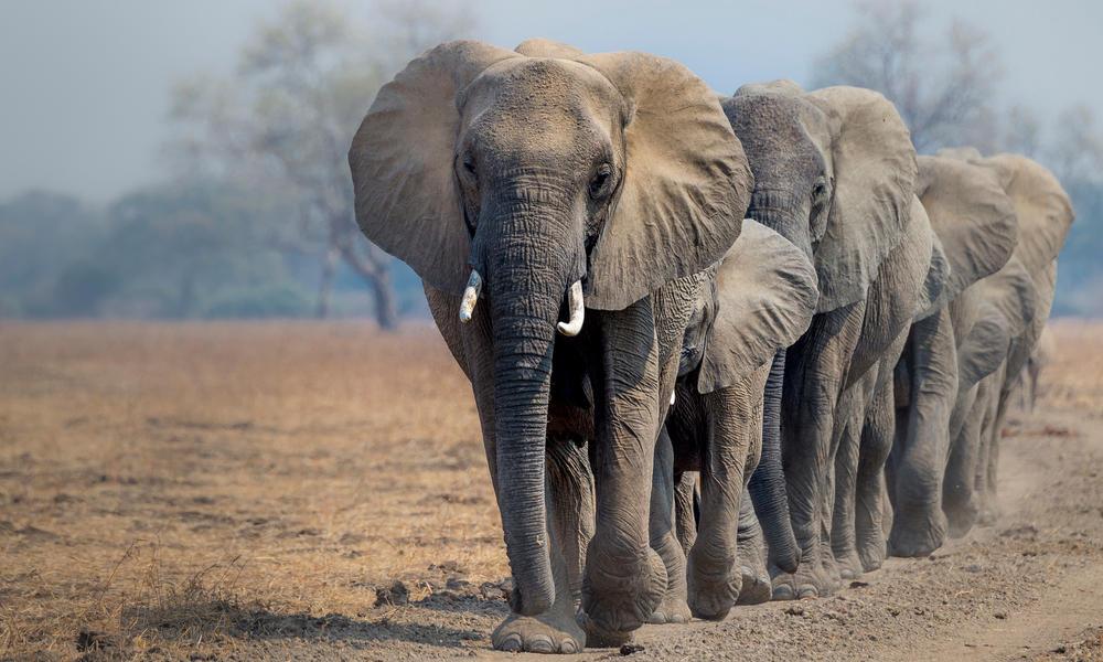 WC_Elephant.jpg?1532014618