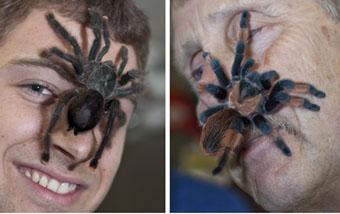 spider-tarantula-combo-340.jpg