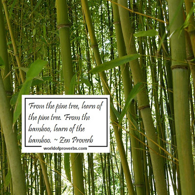 175218705-Bamboo-Quotes2.jpg