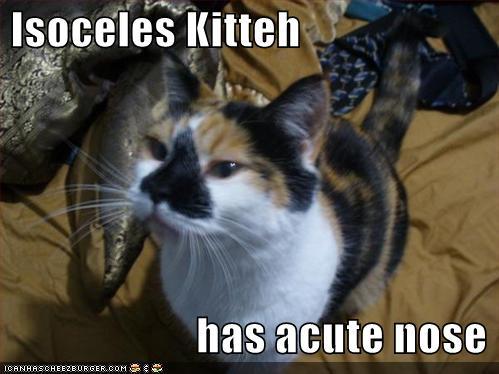 tri-cat.jpg
