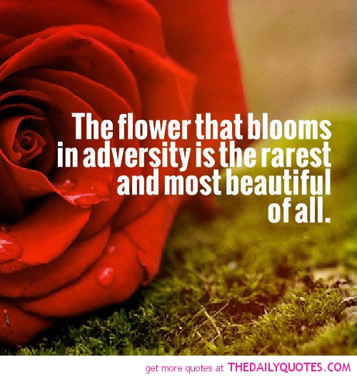 the-flower-that-blooms-in-adversity-life-quotes-sayings-pictures.jpg
