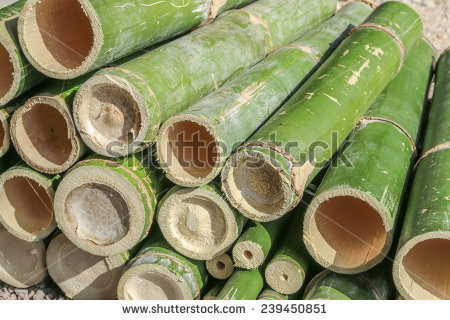 stock-photo-bamboo-is-a-grass-family-tree-a-tall-very-utilized-by-many-leaves-also-become-food-for-the-pandas-239450851.jpg
