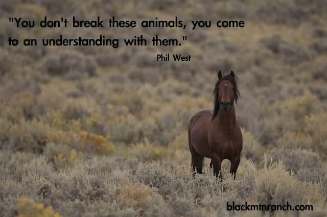 you-dont-break-these-animals-you-come-to-an-understanding-with-them-horse-quote.jpg