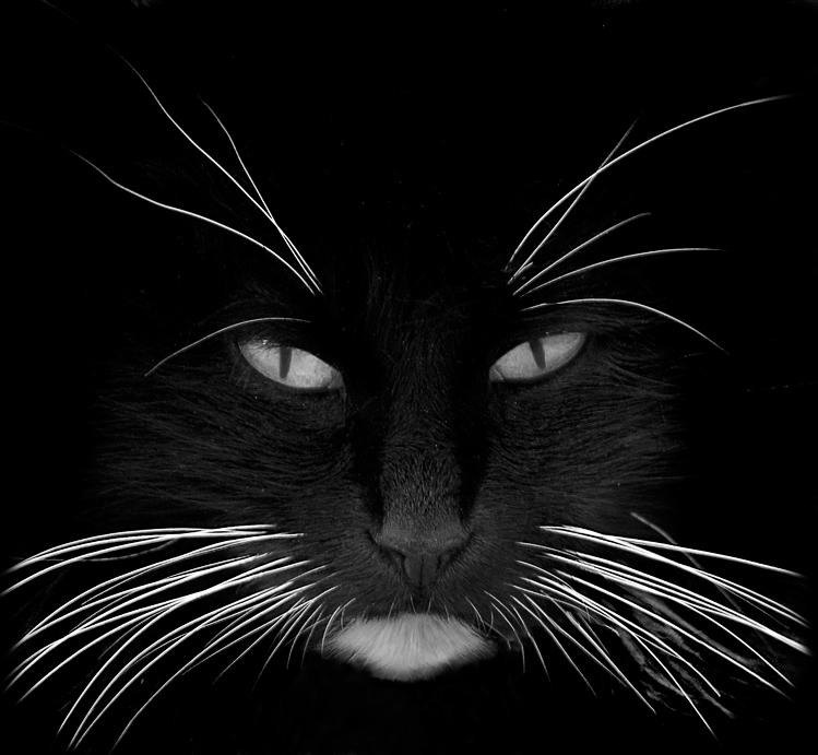 black_cat_white_whiskers.jpg
