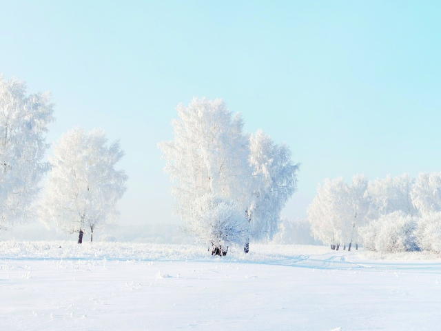 2017Winter_Beautiful_white-frosted_trees