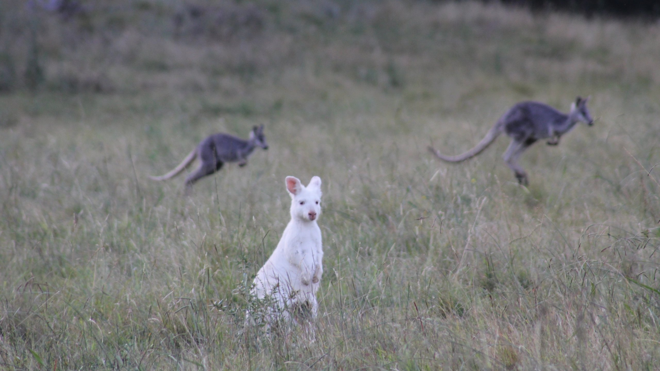125070-Kangaroo-Valley.jpg