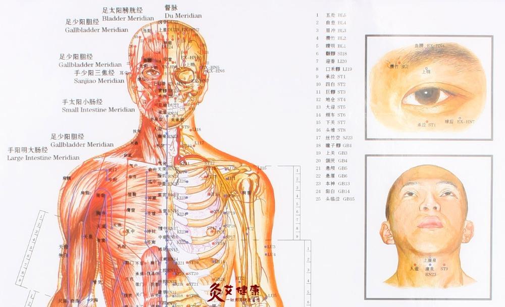 Waterproof-chart-of-meridian-acupuncture