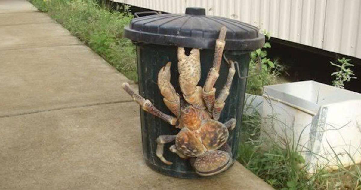 og-image-coconut-crab.jpg