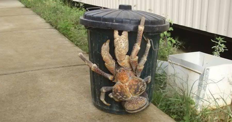 coconut-crab-trash-can.jpg