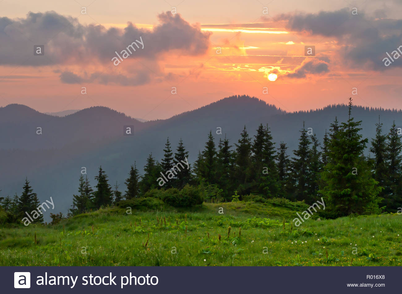 srpuce-and-pine-trees-on-a-lush-green-me