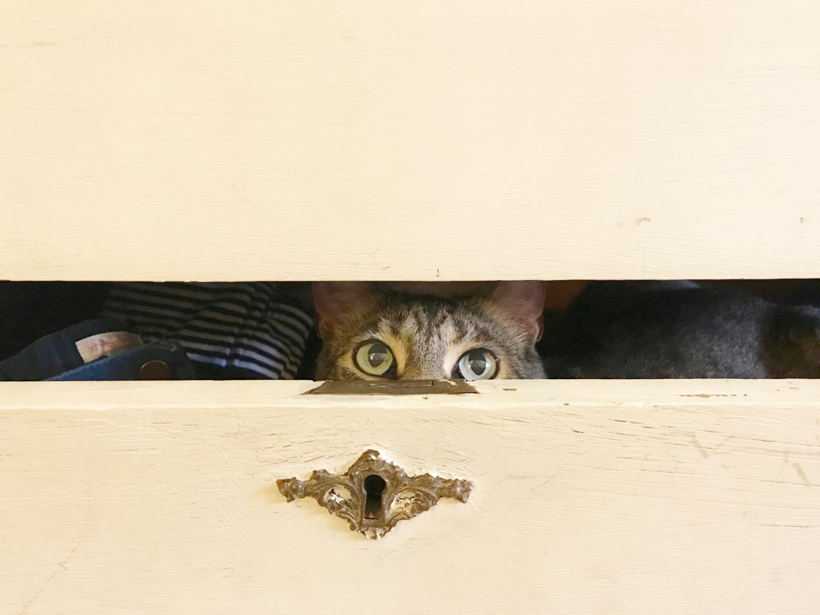 hiding-kitty-kitty.jpg