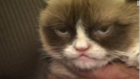 190517083758-grumpy-cat-dies-large-169.j