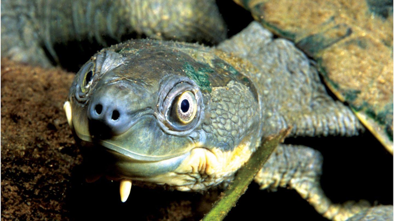 190110-turtle-full-1440x810.jpg