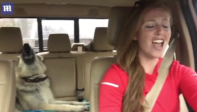 Shepherd dog sings along to 'We are the champions'   Daily Mail Online