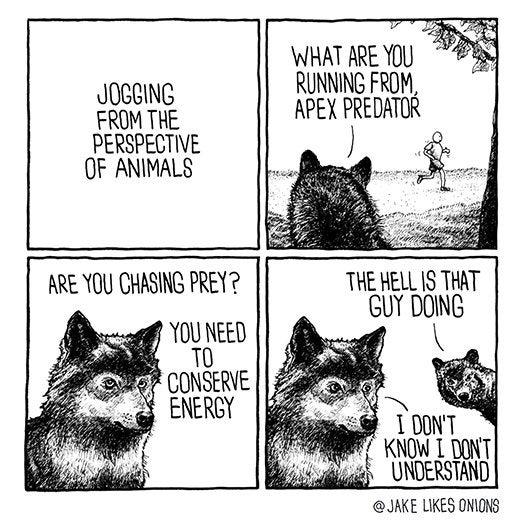 Image result for animals wonder why humans jog