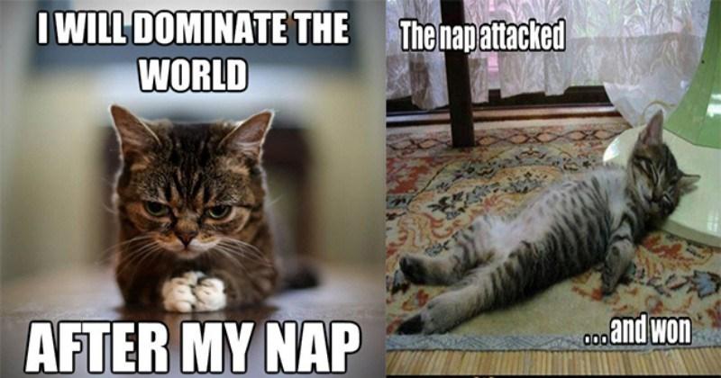 nap tired funny memes Memes animal memes animals - 7223301