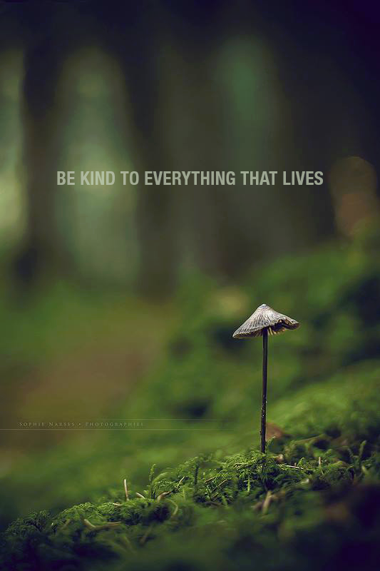 Yes ~ Be kind to everything that lives. We all show our souls in ...