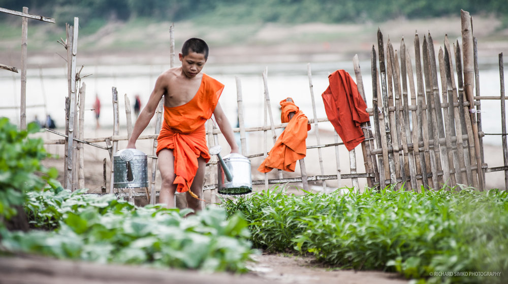 buddhist-monk-gardening.jpg