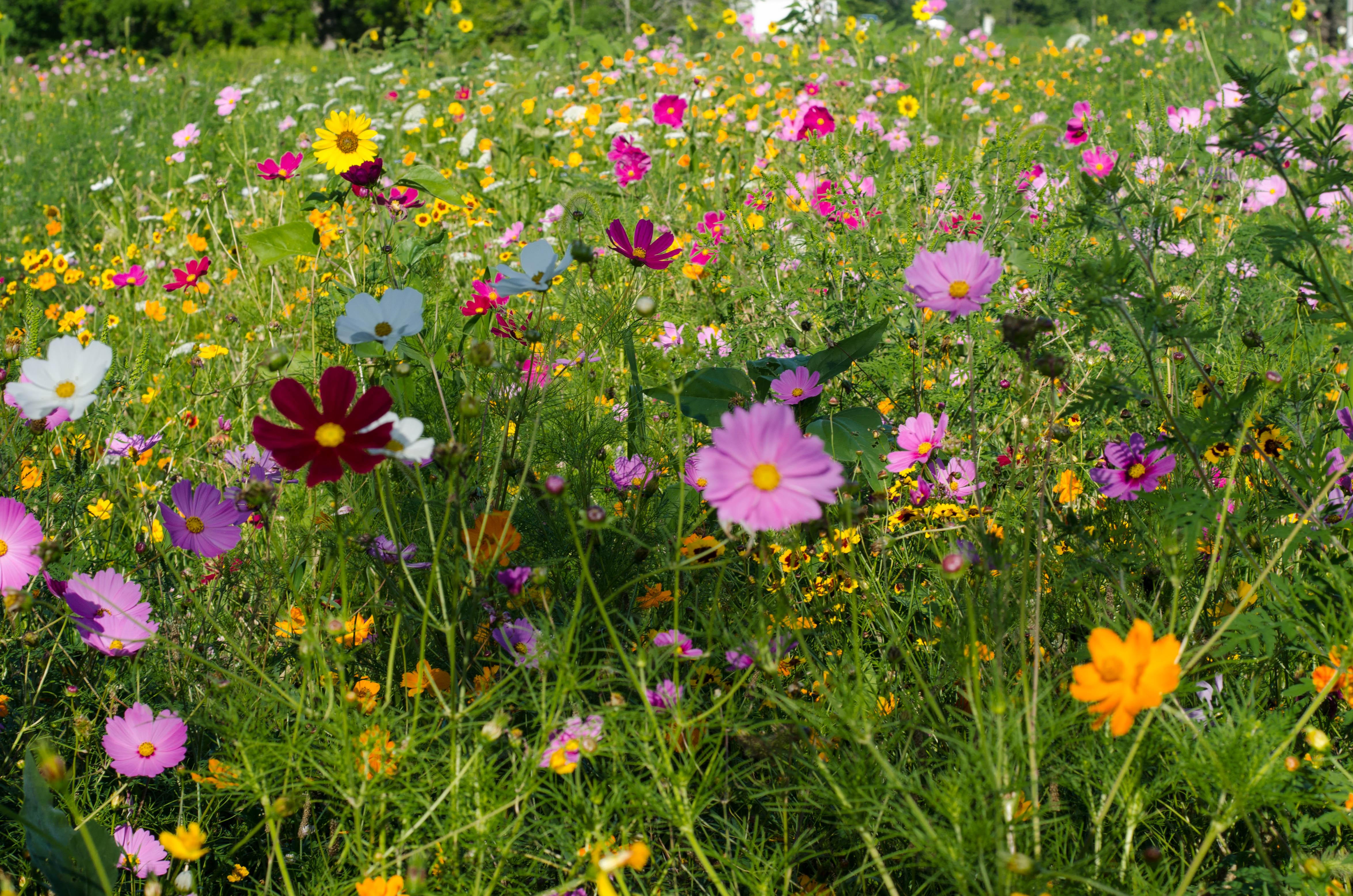 wild-flowers-52.jpg