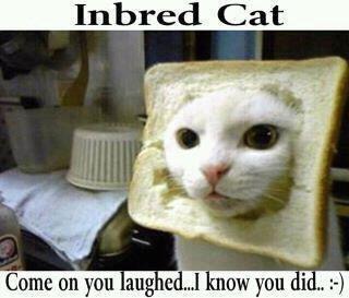inbred-cat.jpg?w=547