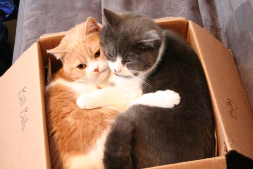Why Do Cats Love Boxes and Bags?-Kittentoob