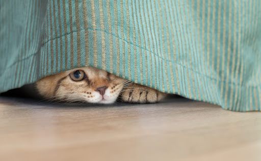 Why is My Cat Hiding? | Acoma Animal Clinic