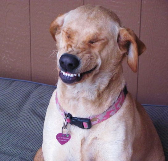 funniest-smiling-dogs-30-pictures_11.jpg
