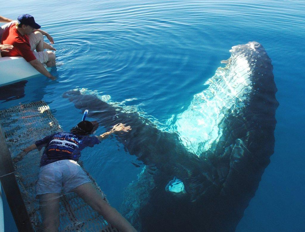 9-2426054-whale%20encounters%20hervey%20