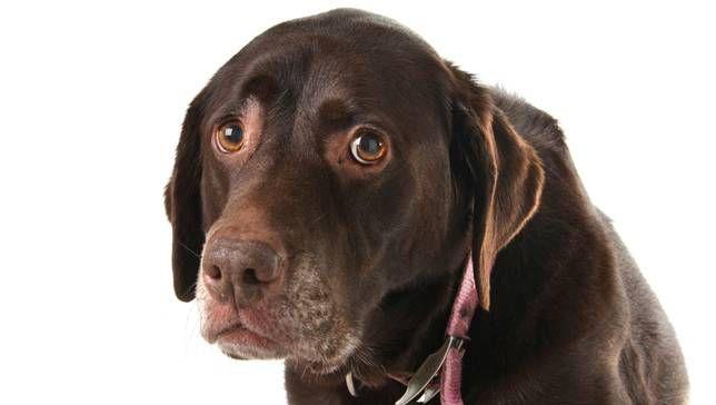 dog-looking-sad.jpg.653x0_q80_crop-smart