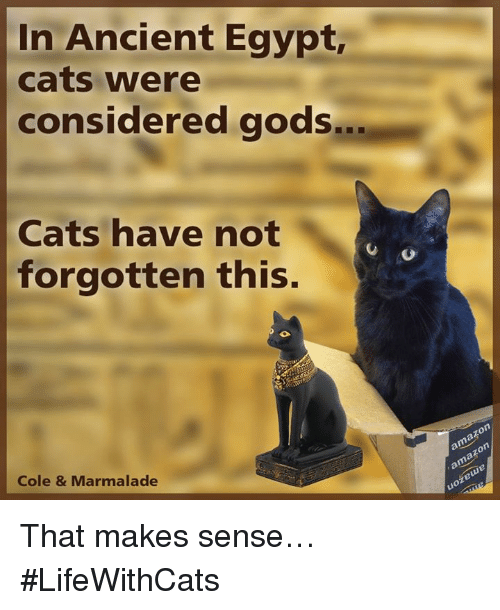 in-ancient-egypt-cats-were-considered-go