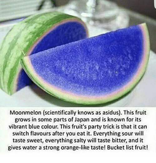 moonmelon-scientifically-knows-as-asidus