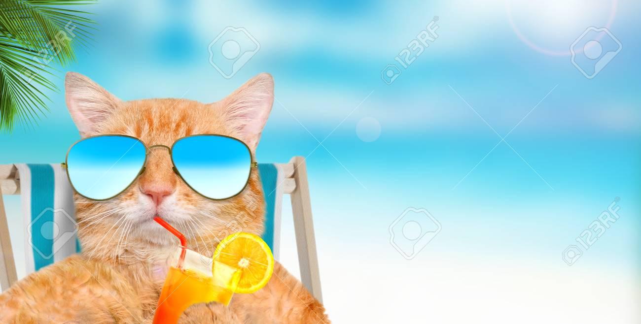 78158689-cat-wearing-sunglasses-sitting-