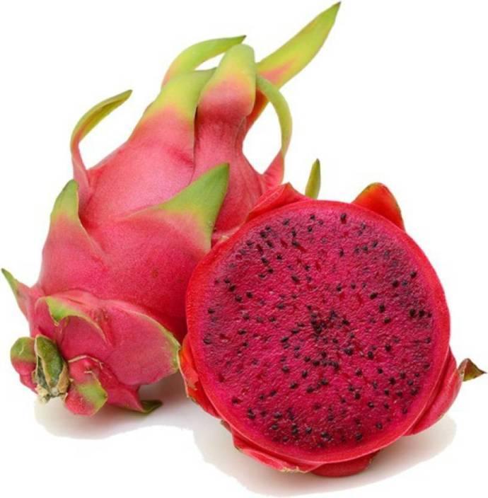 50-50pc-pitaya-red-dragon-fruit-seed-orchidwala-original-imafcqhpfnxmg4sg.jpeg?q=70
