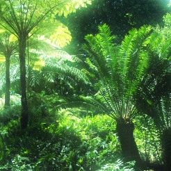 Image result for cycads forest