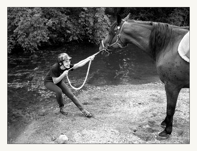Blog-4-Leading-a-horse-to-water.jpg