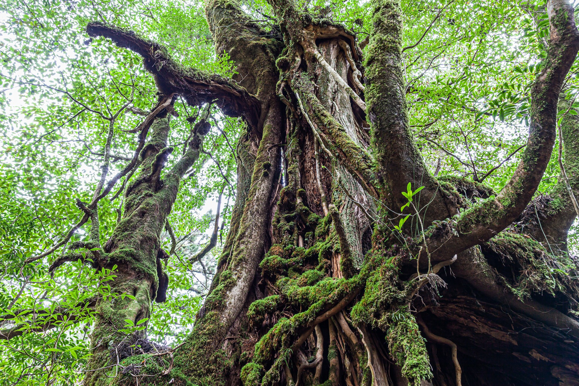 May be an image of tree and nature