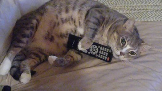'My cat is in control'