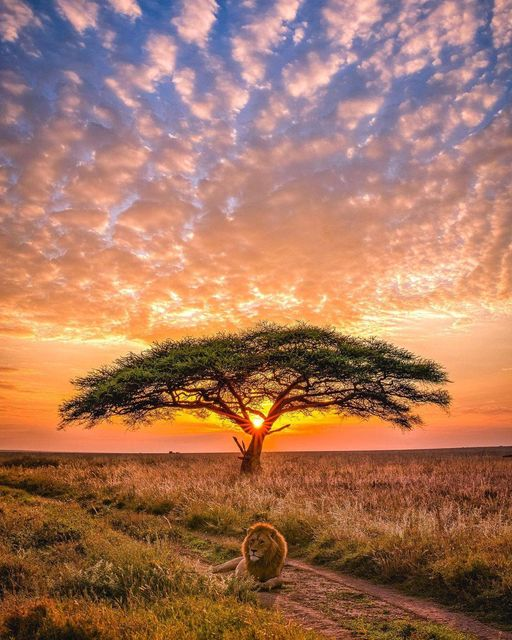 May be an image of tree, nature and sky