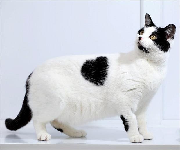 cat-heart_1849648b.jpg