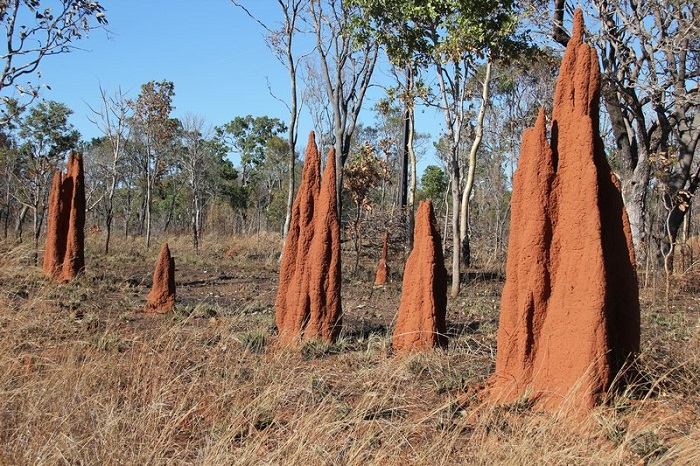 Cathedral-Termite-Mounds.jpg