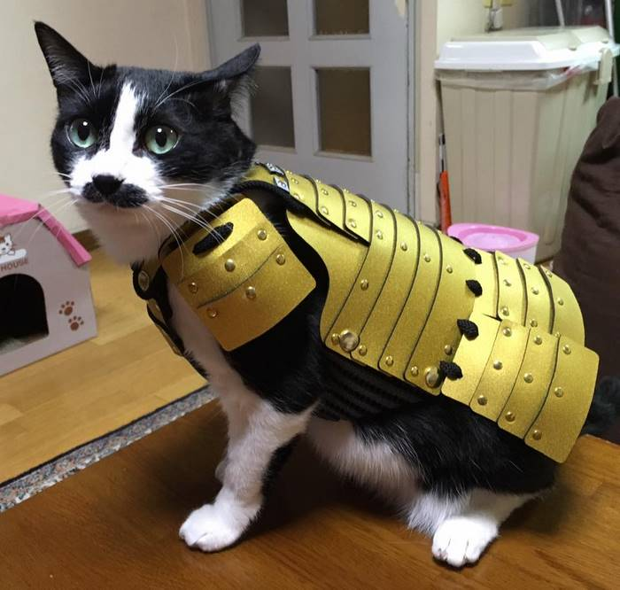 pet-dog-cat-armor-samurai-age-japan-5.jp