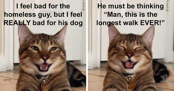 cat-meme-joke-fb22-png__700.jpg