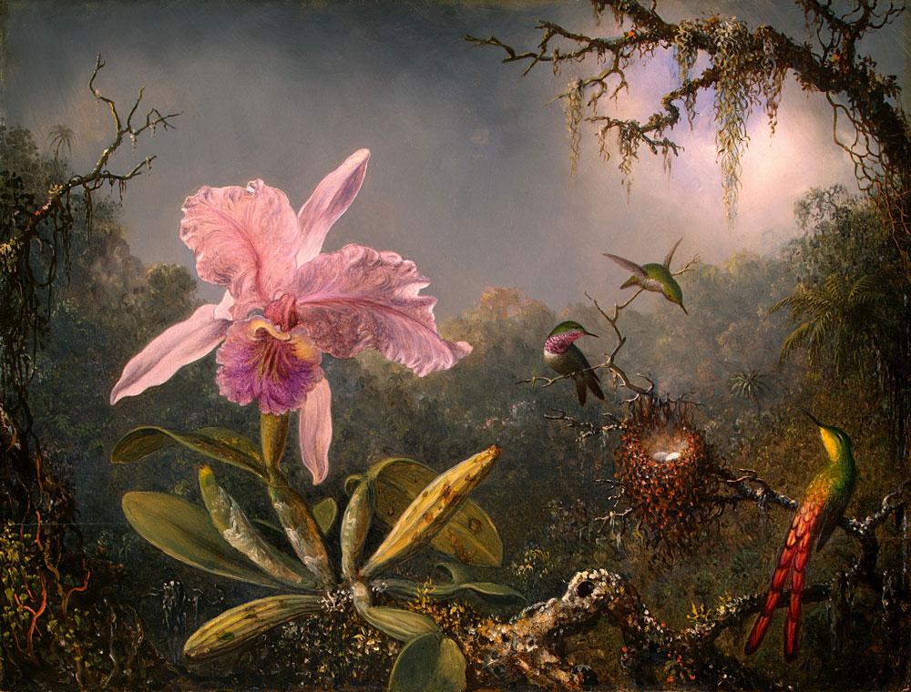 Martin_Johnson_Heade-Cattleya_Orchid_and