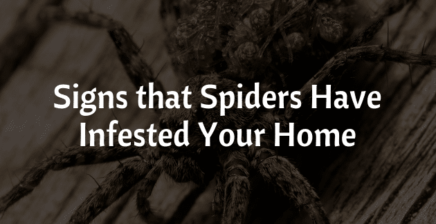 signs-spiders-infested-home.png