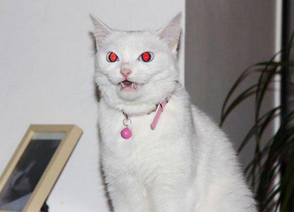 evil-cats-white-collar.jpg