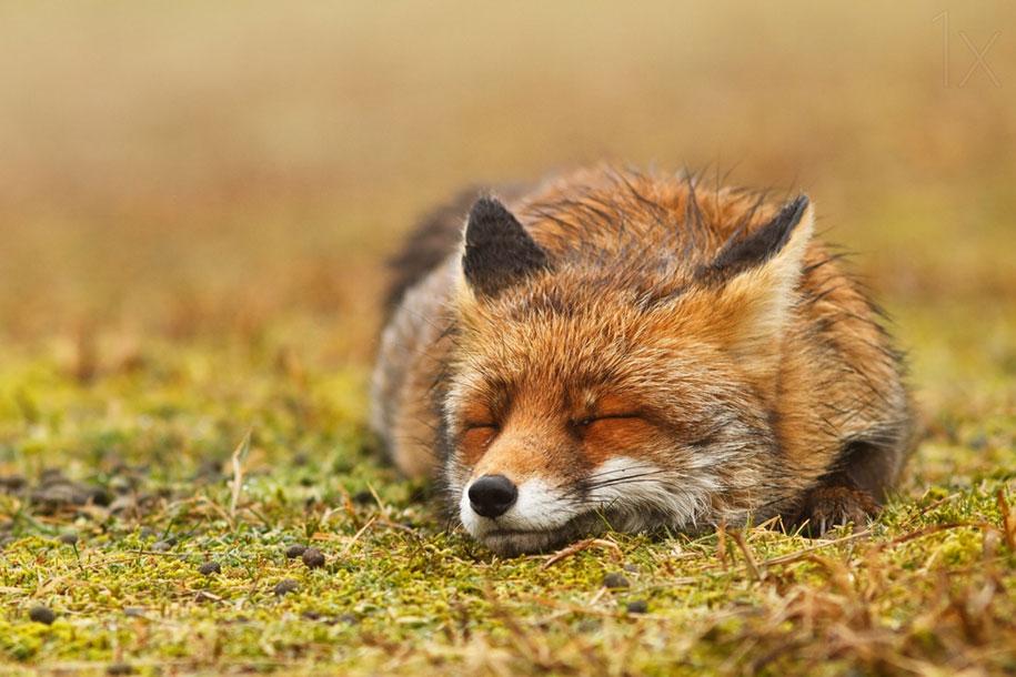 Bildergebnis für relaxed animal